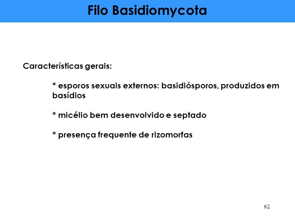 Filo Basidiomycota Características gerais: * esporos sexuais externos: basidiósporos, produzidos em basídios * micélio bem desenvolvido e septado * pr