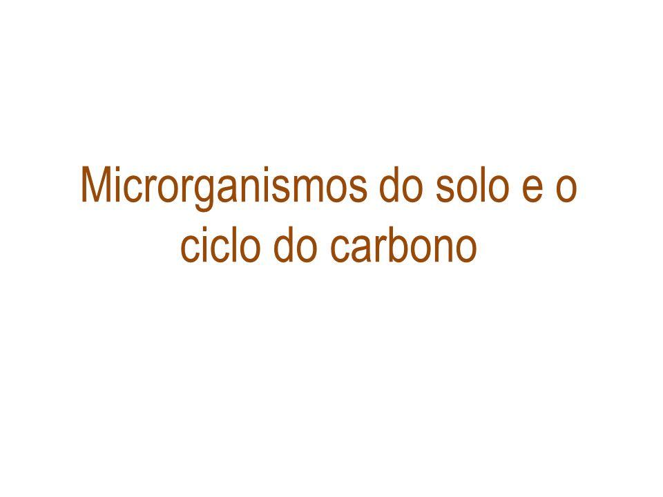 Microrganismos do solo e o ciclo do carbono
