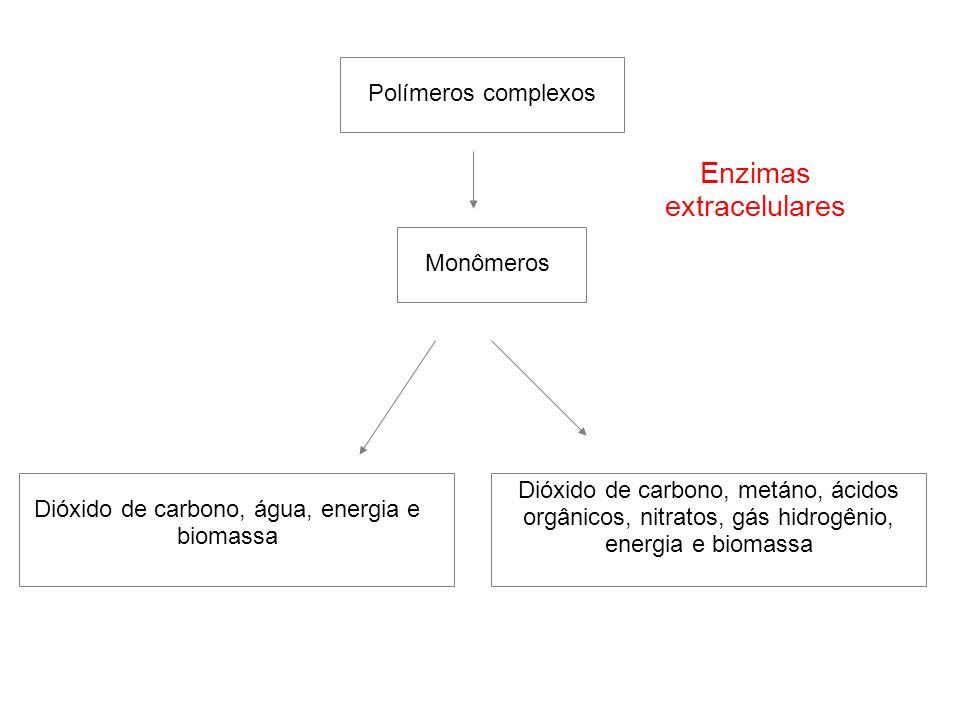 Polímeros complexos MonômerosDióxido de carbono, água, energia e biomassa Dióxido de carbono, metáno, ácidos orgânicos, nitratos, gás hidrogênio, ener