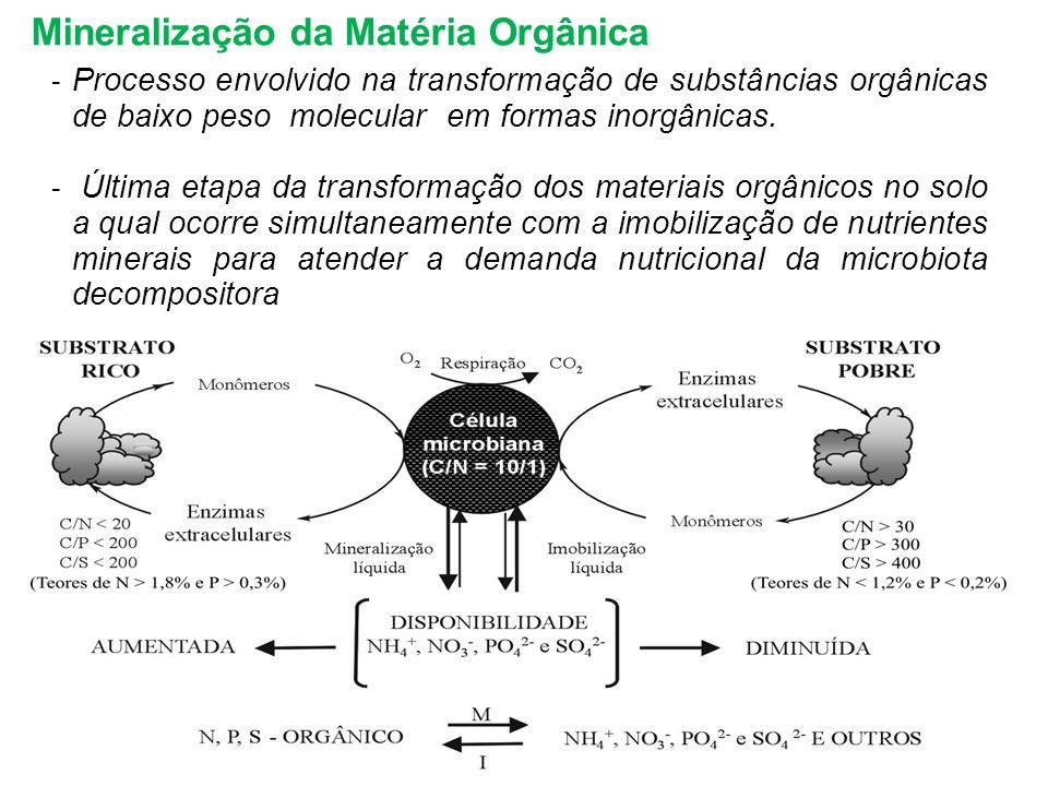 Mineralização da Matéria Orgânica - Processo envolvido na transformação de substâncias orgânicas de baixo peso molecular em formas inorgânicas. - Últi