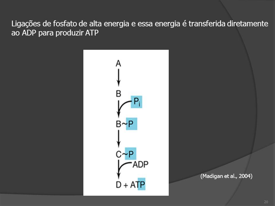 (Madigan et al., 2004) Ligações de fosfato de alta energia e essa energia é transferida diretamente ao ADP para produzir ATP 20