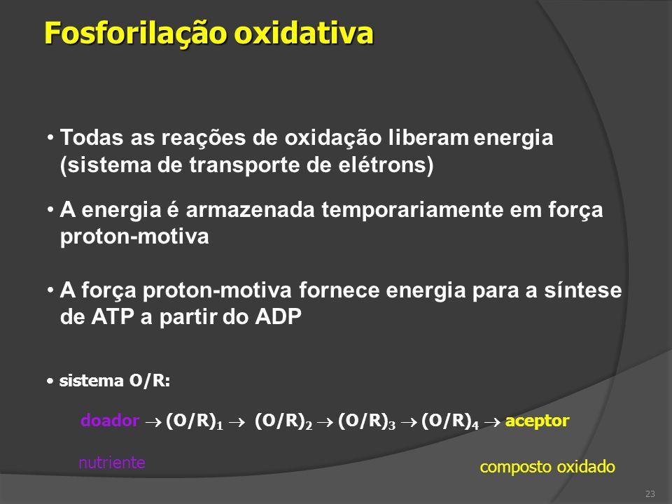 Todas as reações de oxidação liberam energia (sistema de transporte de elétrons) A energia é armazenada temporariamente em força proton-motiva A força