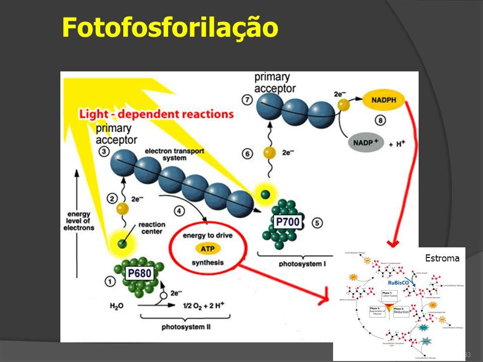 Fotofosforilação 33 Estroma