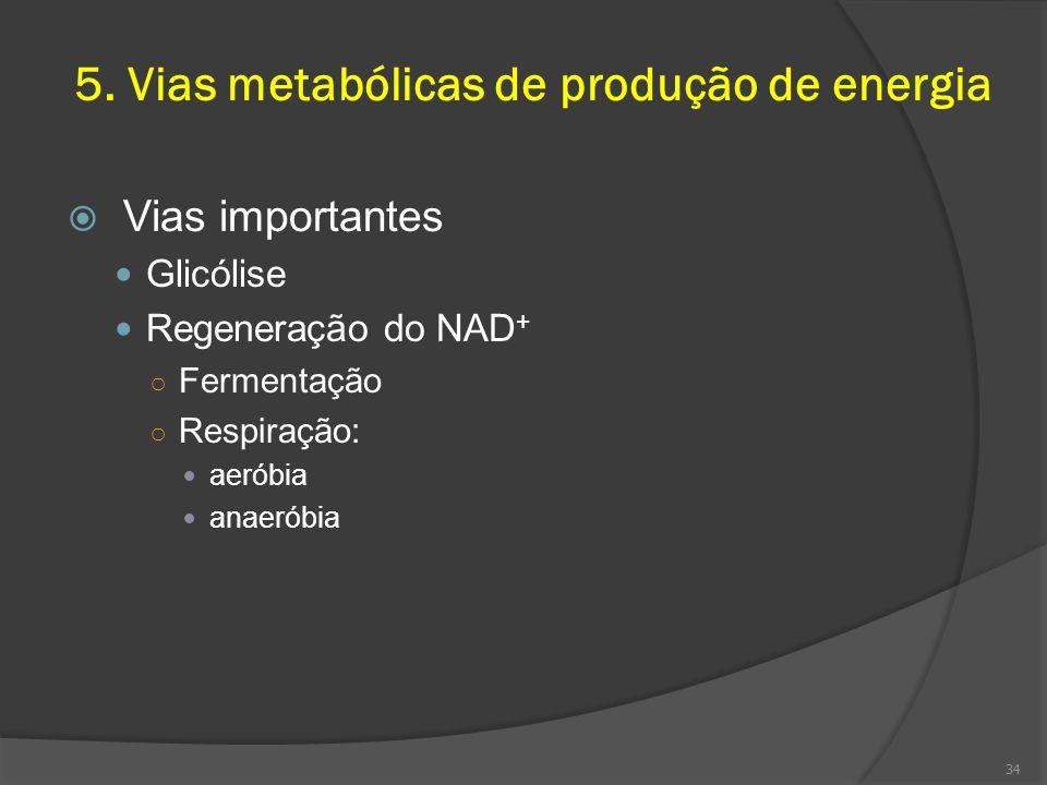5. Vias metabólicas de produção de energia Vias importantes Glicólise Regeneração do NAD + Fermentação Respiração: aeróbia anaeróbia 34