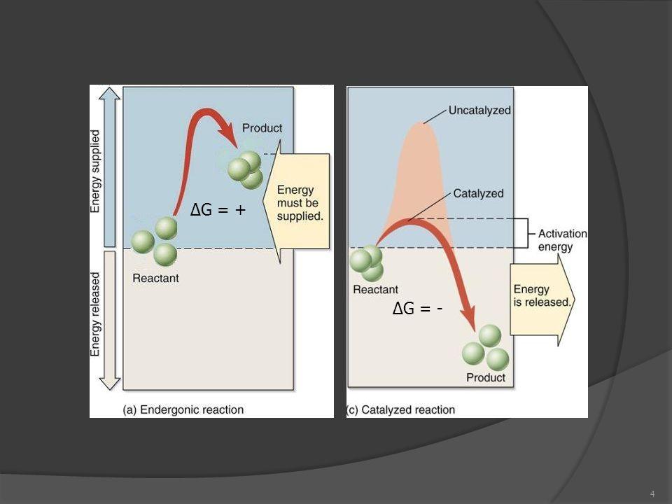 Requerimentos de energia: Componentes celulares: parede, membrana, etc.