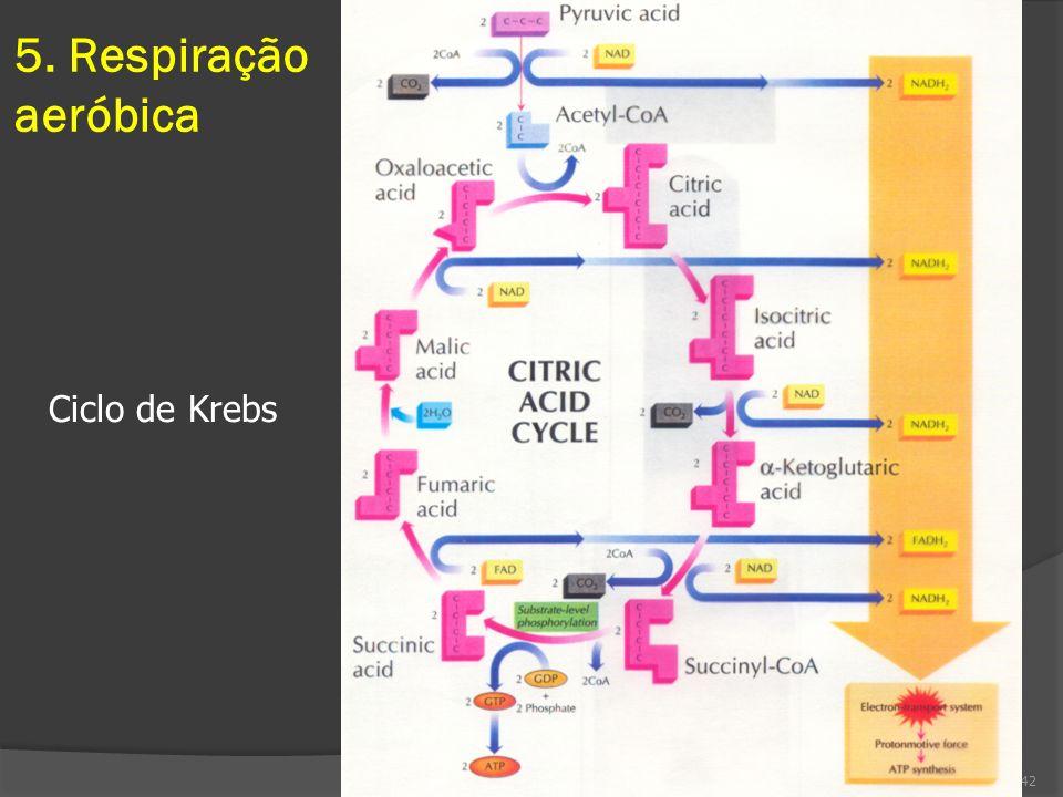 5. Respiração aeróbica 42 Ciclo de Krebs