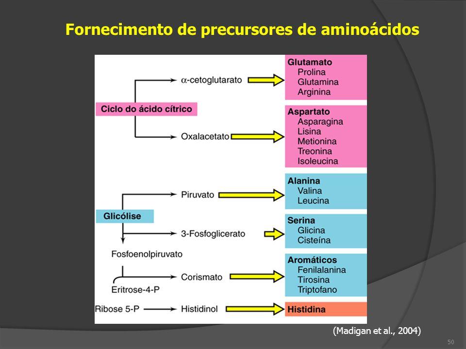 Fornecimento de precursores de aminoácidos (Madigan et al., 2004) 50
