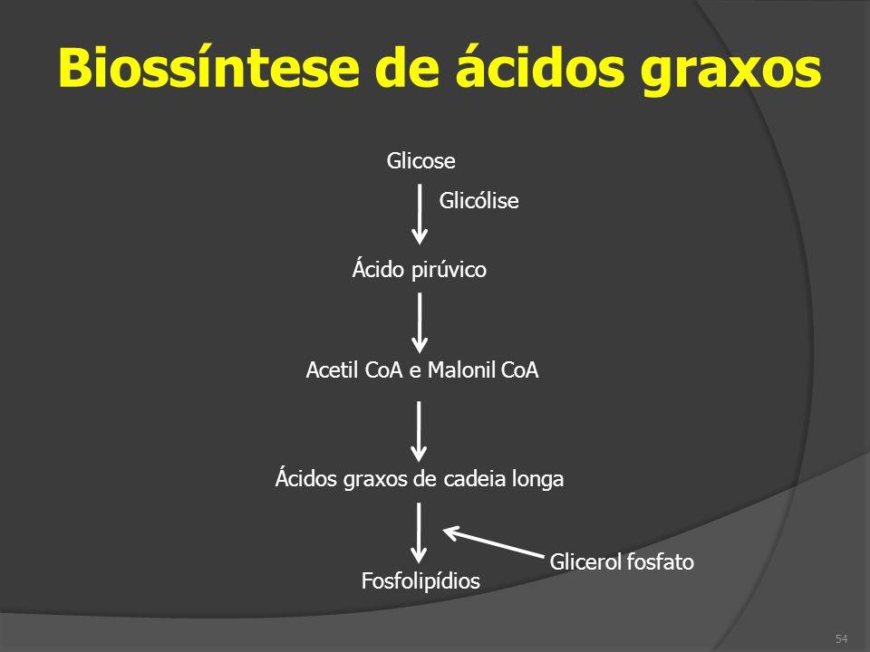 Biossíntese de ácidos graxos Ácido pirúvico Acetil CoA e Malonil CoA Ácidos graxos de cadeia longa Glicose Fosfolipídios Glicólise Glicerol fosfato 54