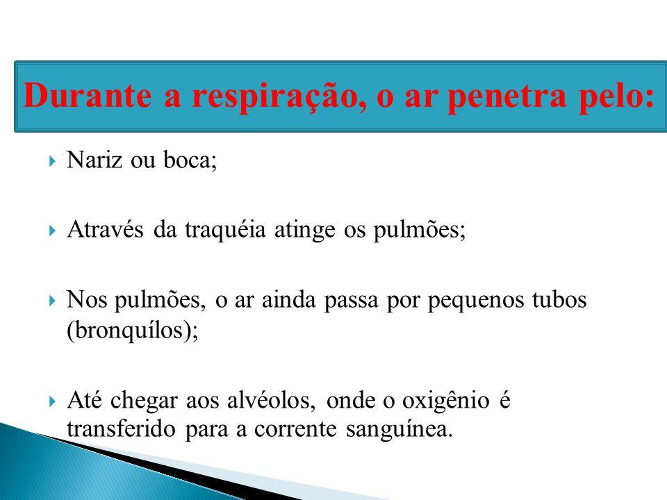 Nariz ou boca; Através da traquéia atinge os pulmões; Nos pulmões, o ar ainda passa por pequenos tubos (bronquílos); Até chegar aos alvéolos, onde o o