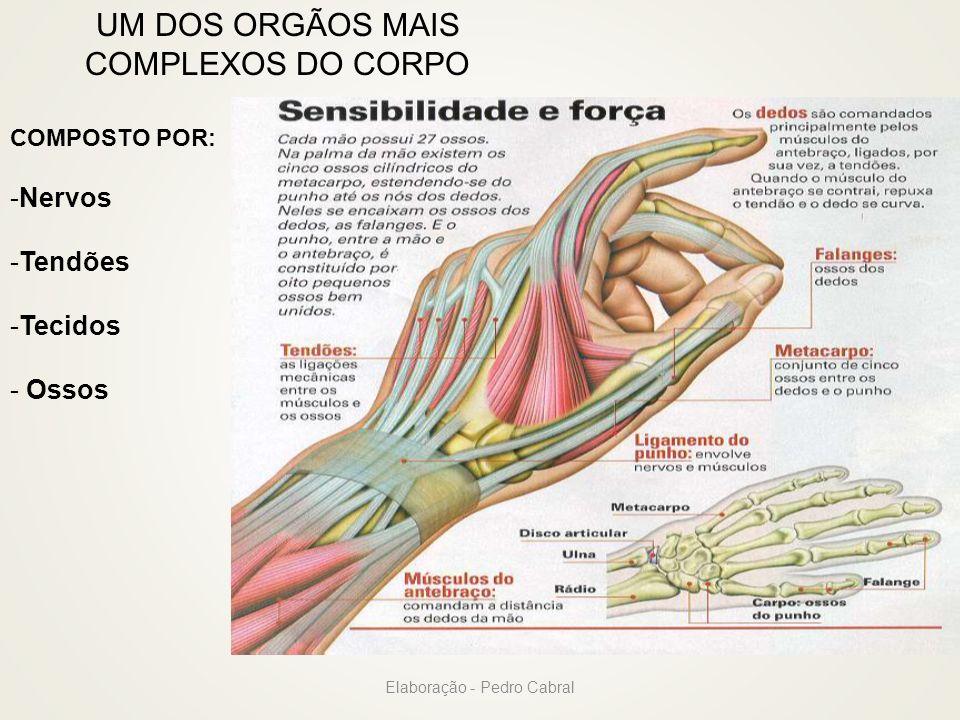 UM DOS ORGÃOS MAIS COMPLEXOS DO CORPO COMPOSTO POR: -Nervos -Tendões -Tecidos - Ossos Elaboração - Pedro Cabral