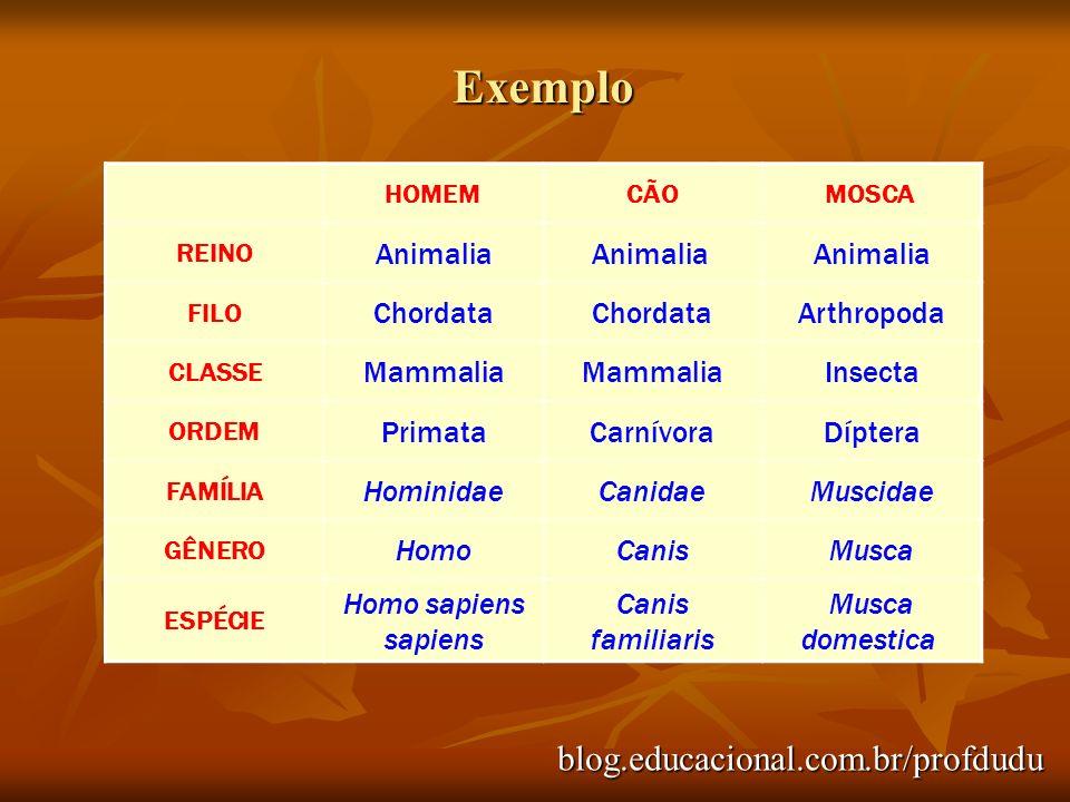 blog.educacional.com.br/profdudu HOMEM CÃOMOSCA REINO Animalia FILO Chordata Arthropoda CLASSE Mammalia Insecta ORDEM PrimataCarnívoraDíptera FAMÍLIA