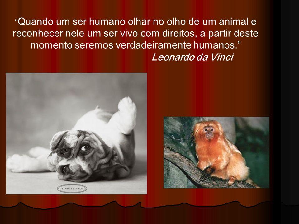 Quando um ser humano olhar no olho de um animal e reconhecer nele um ser vivo com direitos, a partir deste momento seremos verdadeiramente humanos. Le