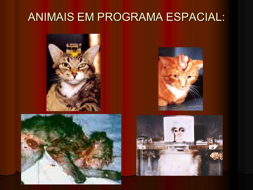 ANIMAIS EM PROGRAMA ESPACIAL:
