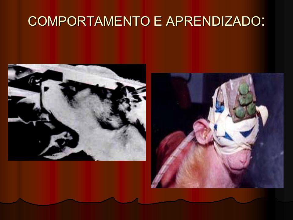 COMPORTAMENTO E APRENDIZADO :