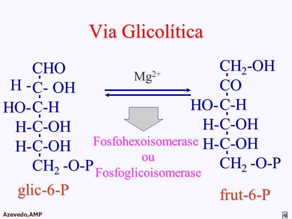 AMPA 2003 Azevedo,AMP Via Glicolítica glic-6-P FosfohexoisomeraseouFosfoglicoisomerase Mg 2+ CH 2 -OH COC-HC-OHC-OH CH 2 -O-P HO- H- H- frut-6-PCHO C-