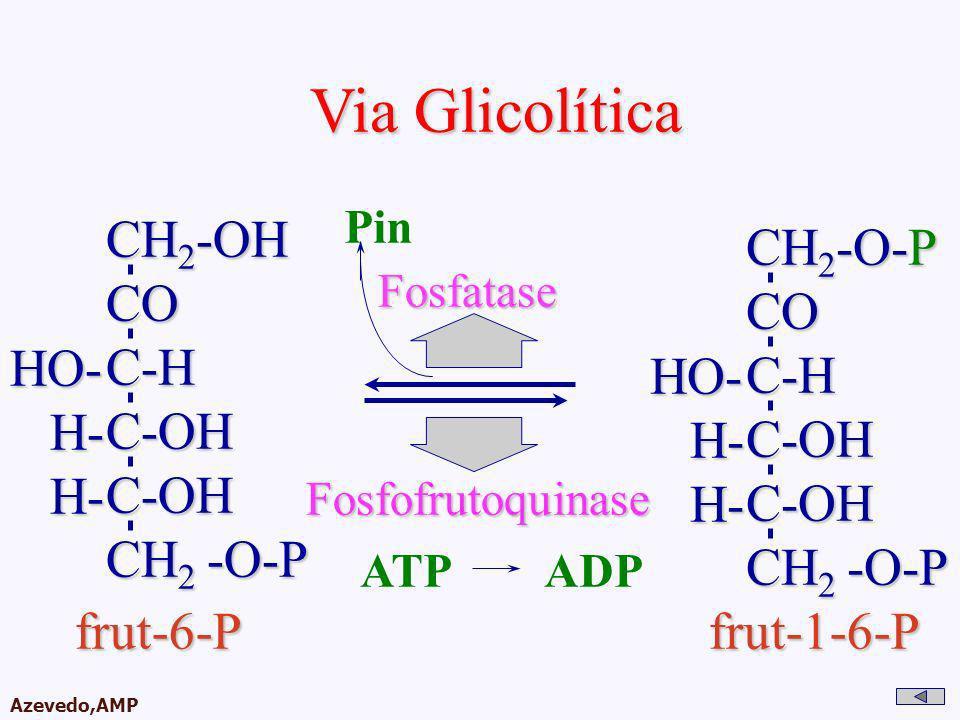 AMPA 2003 Azevedo,AMP Via Glicolítica CH 2 -OH COC-HC-OHC-OH CH 2 -O-P HO- H- H- Fosfofrutoquinase ATPADP CH 2 -O-P COC-HC-OHC-OH HO- H- H- frut-6-P f