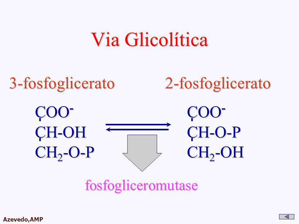 AMPA 2003 Azevedo,AMP Via Glicolítica 3-fosfoglicerato 2-fosfoglicerato 3-fosfoglicerato 2-fosfoglicerato COO - CH-OH CH 2 -O-P fosfogliceromutase COO