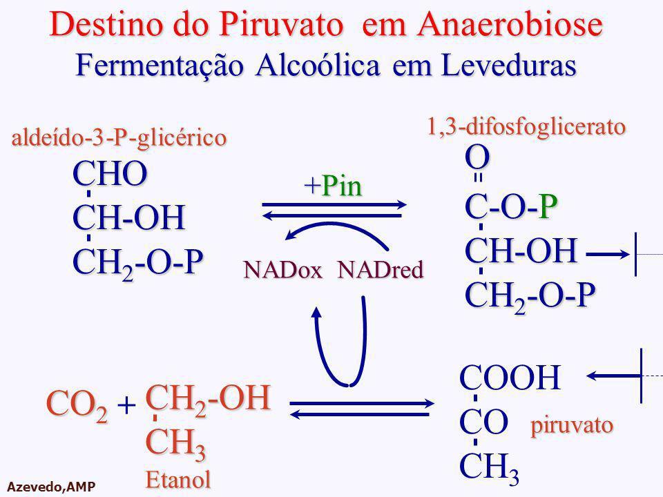 AMPA 2003 Azevedo,AMP Destino do Piruvato em Anaerobiose Fermentação Alcoólica em Leveduras CHOCH-OH CH 2 -O-P C-O-P CH-OH CH 2 -O-P O +Pin NADoxNADre