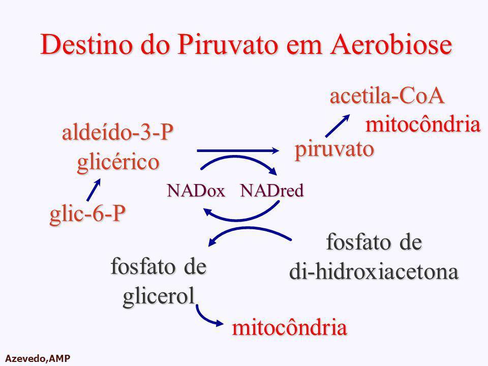 AMPA 2003 Azevedo,AMP Destino do Piruvato em Aerobiose glic-6-P aldeído-3-Pglicérico piruvato acetila-CoA fosfato de di-hidroxiacetona NADoxNADred gli