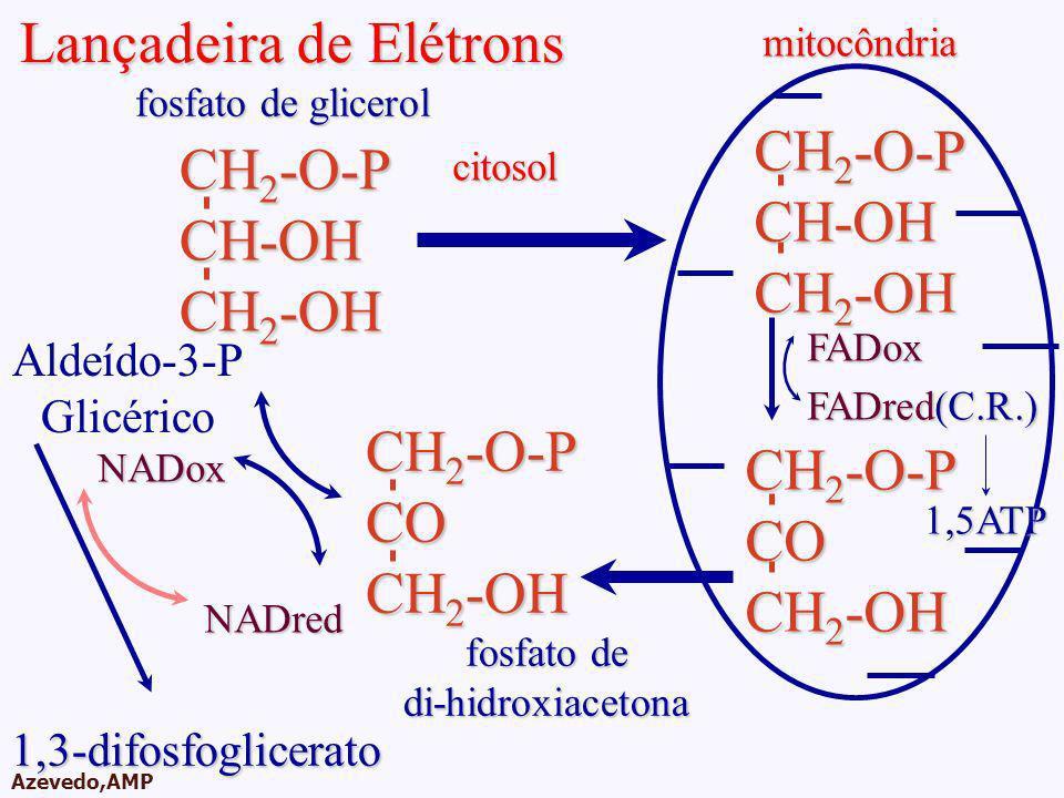 AMPA 2003 Azevedo,AMP Lançadeira de Elétrons mitocôndriacitosol Aldeído-3-P Glicérico NADox NADred 1,3-difosfoglicerato CH 2 -O-P CO CH 2 -OH fosfato