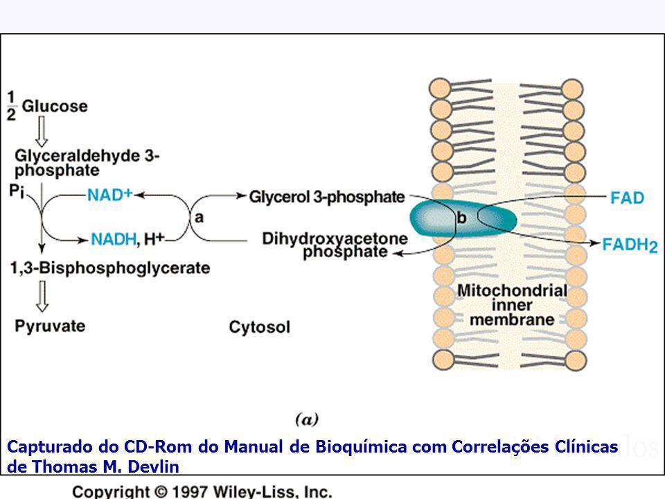 AMPA 2003 Azevedo,AMP + Músculos Capturado do CD-Rom do Manual de Bioquímica com Correlações Clínicas de Thomas M. Devlin