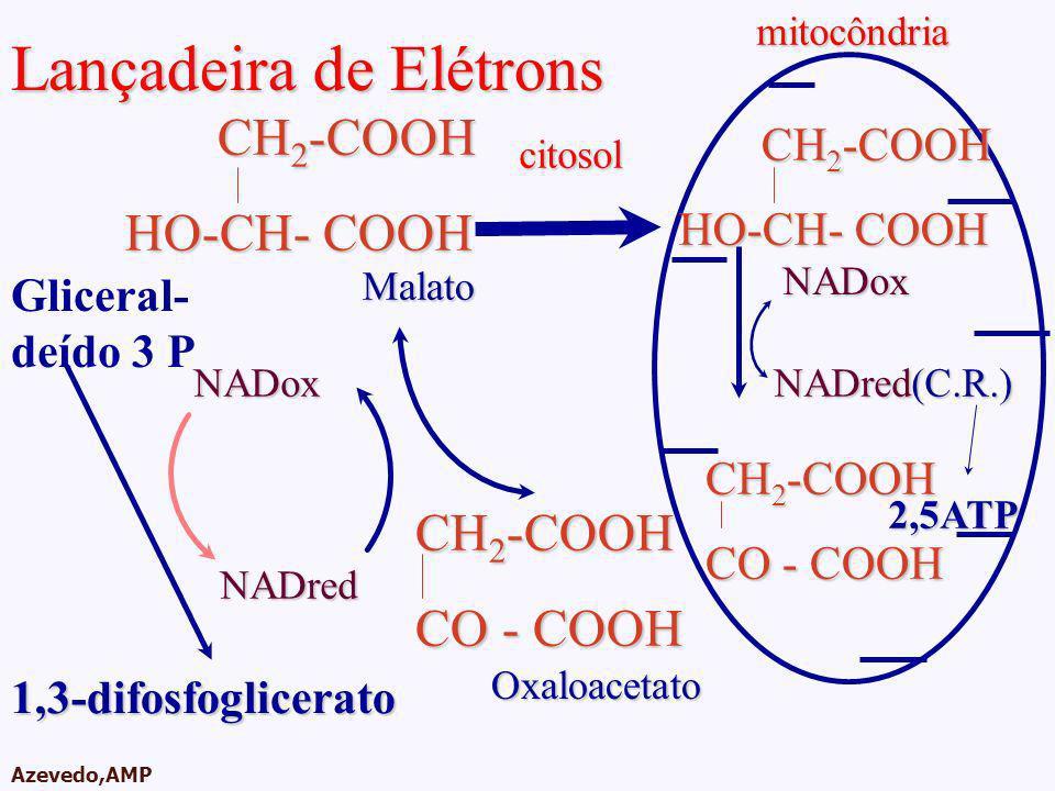 AMPA 2003 Azevedo,AMPmitocôndriacitosol Lançadeira de Elétrons Gliceral- deído 3 PNADox Oxaloacetato CH 2 -COOH CO - COOH NADred1,3-difosfoglicerato M
