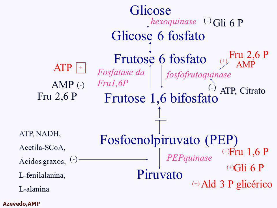 AMPA 2003 Azevedo,AMP Glicose Glicose 6 fosfato Frutose 6 fosfato Frutose 1,6 bifosfato Fosfoenolpiruvato (PEP) Piruvato hexoquinase fosfofrutoquinase