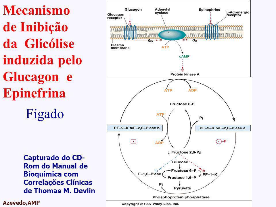 AMPA 2003 Azevedo,AMP Mecanismo de Inibição da Glicólise induzida pelo Glucagon e Epinefrina Capturado do CD- Rom do Manual de Bioquímica com Correlaç