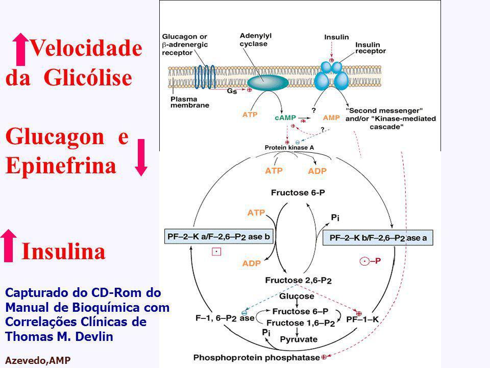 AMPA 2003 Azevedo,AMP Velocidade da Glicólise Glucagon e Epinefrina Insulina Capturado do CD-Rom do Manual de Bioquímica com Correlações Clínicas de T