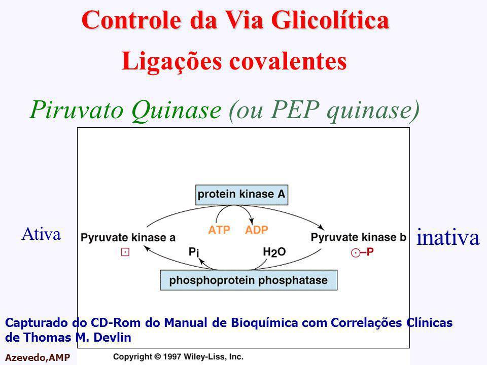 AMPA 2003 Azevedo,AMP Controle da Via Glicolítica Ligações covalentes Piruvato Quinase (ou PEP quinase) inativa Ativa Capturado do CD-Rom do Manual de