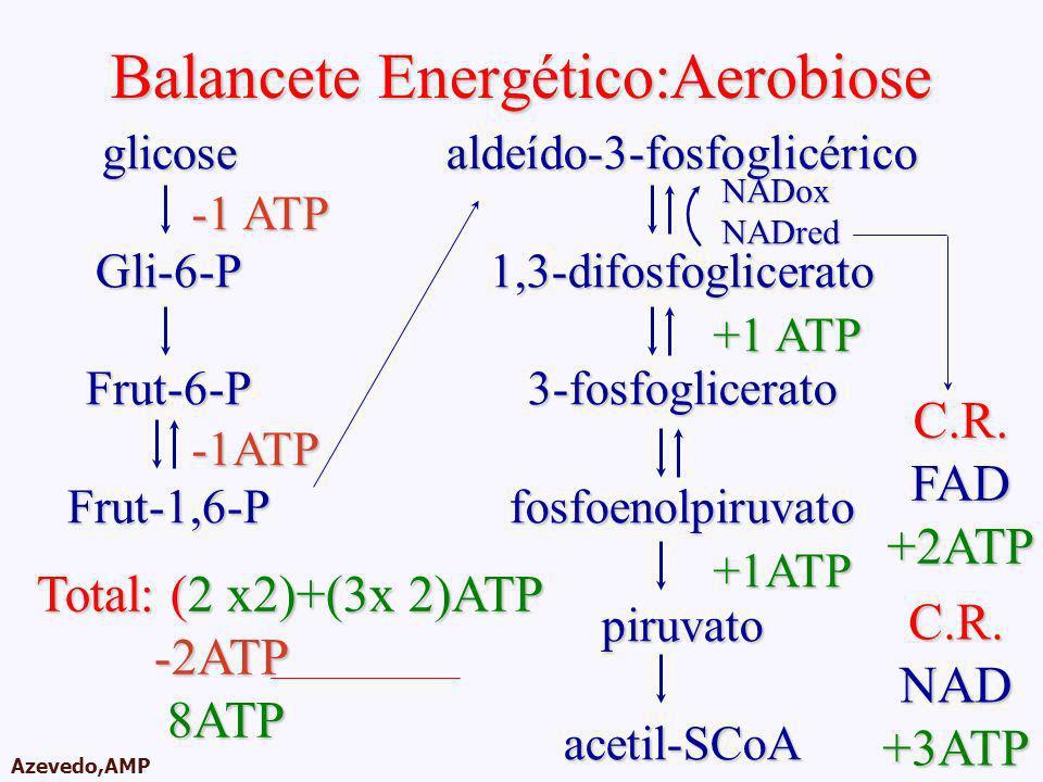 AMPA 2003 Azevedo,AMP Balancete Energético:Aerobiose glicoseGli-6-PFrut-6-PFrut-1,6-P -1 ATP -1ATP aldeído-3-fosfoglicérico1,3-difosfoglicerato3-fosfo