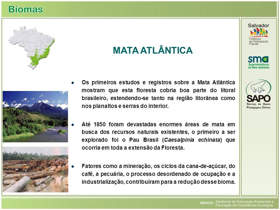 Os primeiros estudos e registros sobre a Mata Atlântica mostram que esta floresta cobria boa parte do litoral brasileiro, estendendo-se tanto na regiã