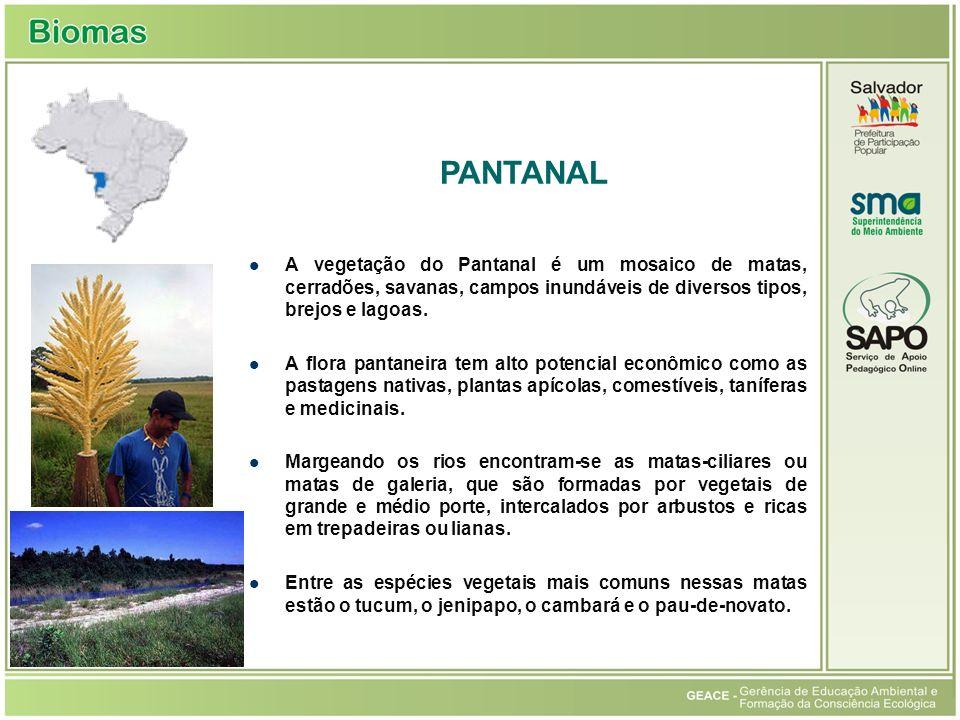 A vegetação do Pantanal é um mosaico de matas, cerradões, savanas, campos inundáveis de diversos tipos, brejos e lagoas.