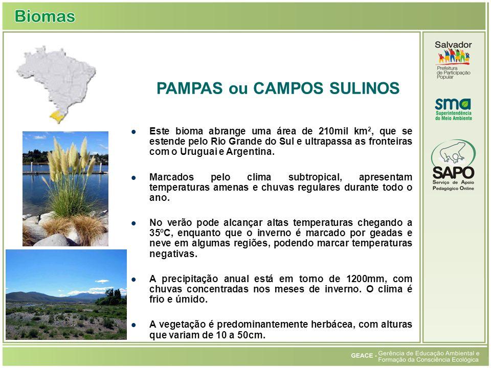 Este bioma abrange uma área de 210mil km 2, que se estende pelo Rio Grande do Sul e ultrapassa as fronteiras com o Uruguai e Argentina. Marcados pelo