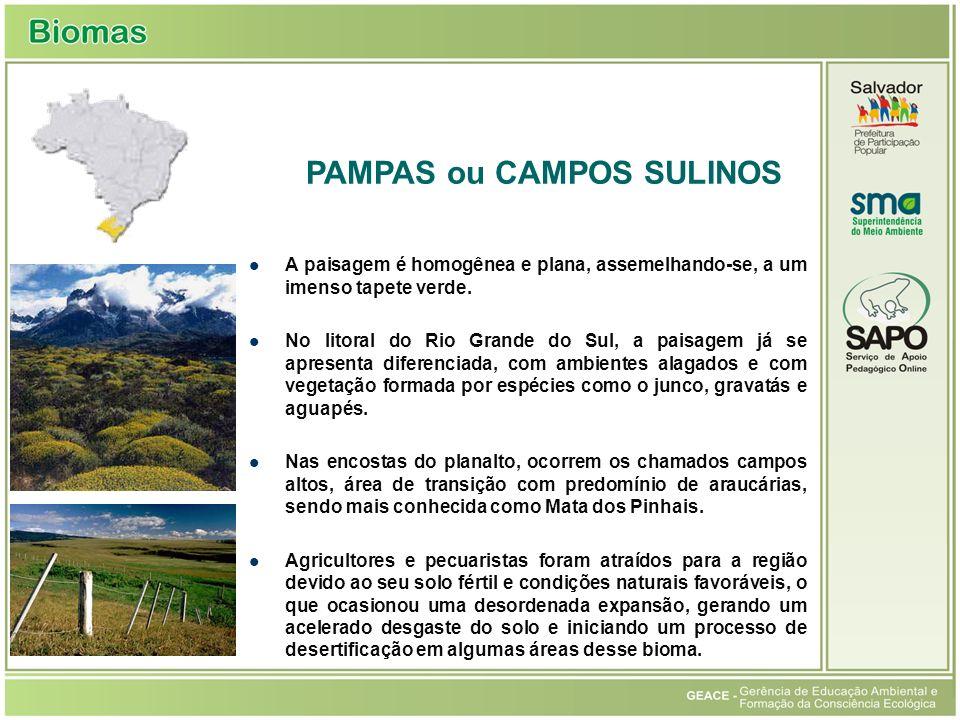 A paisagem é homogênea e plana, assemelhando-se, a um imenso tapete verde.