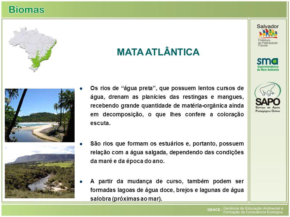 (Fonte: http://www.apremavi.com.br) MATA ATLÂNTICA Mata Atlântica
