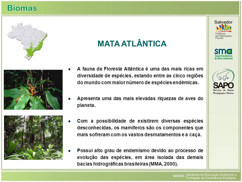 A fauna da Floresta Atlântica é uma das mais ricas em diversidade de espécies, estando entre as cinco regiões do mundo com maior número de espécies endêmicas.