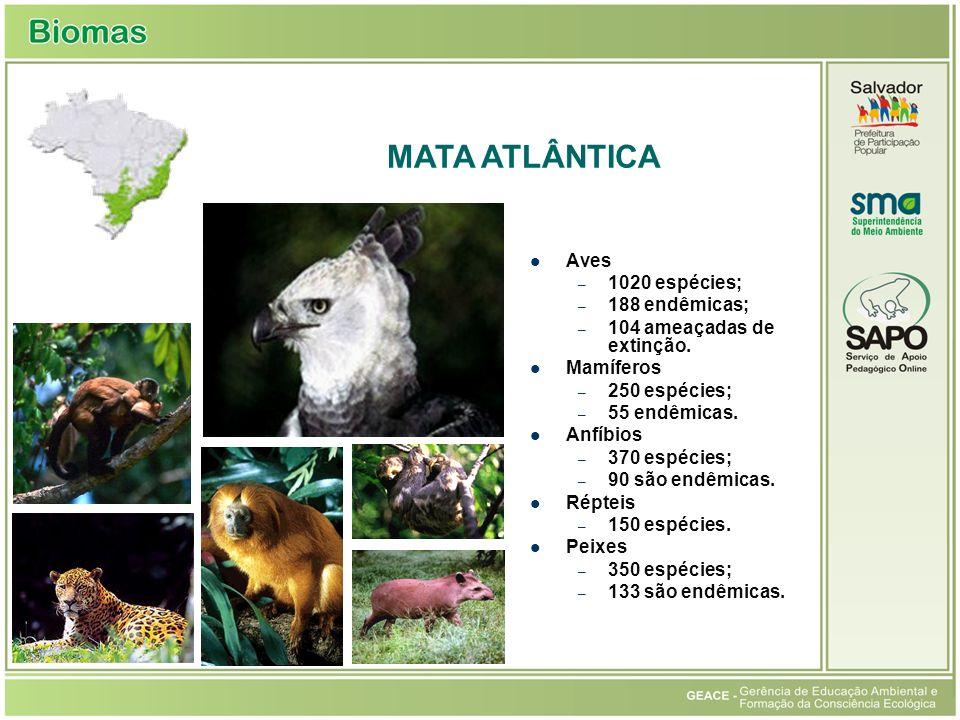 Aves – 1020 espécies; – 188 endêmicas; – 104 ameaçadas de extinção. Mamíferos – 250 espécies; – 55 endêmicas. Anfíbios – 370 espécies; – 90 são endêmi