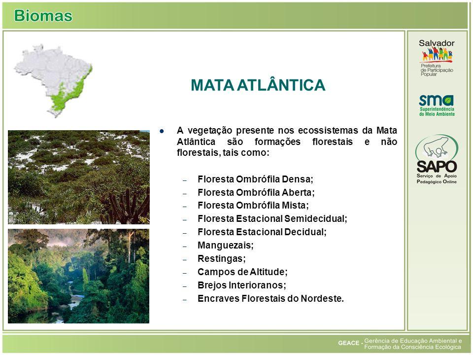 A vegetação presente nos ecossistemas da Mata Atlântica são formações florestais e não florestais, tais como: – Floresta Ombrófila Densa; – Floresta Ombrófila Aberta; – Floresta Ombrófila Mista; – Floresta Estacional Semidecidual; – Floresta Estacional Decidual; – Manguezais; – Restingas; – Campos de Altitude; – Brejos Interioranos; – Encraves Florestais do Nordeste.