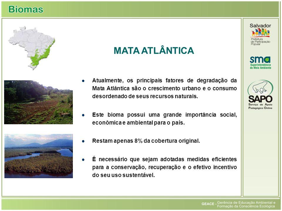Atualmente, os principais fatores de degradação da Mata Atlântica são o crescimento urbano e o consumo desordenado de seus recursos naturais.