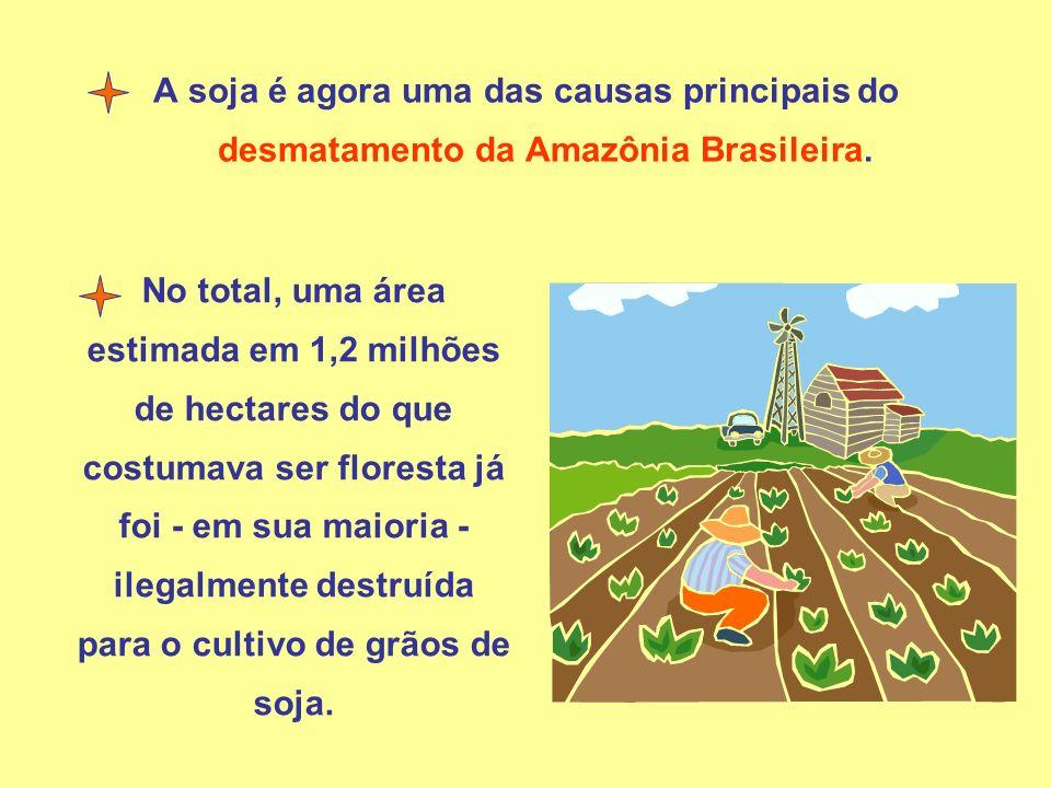A soja é agora uma das causas principais do desmatamento da Amazônia Brasileira. No total, uma área estimada em 1,2 milhões de hectares do que costuma