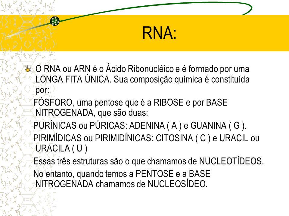 RNA: O RNA ou ARN é o Ácido Ribonucléico e é formado por uma LONGA FITA ÚNICA.