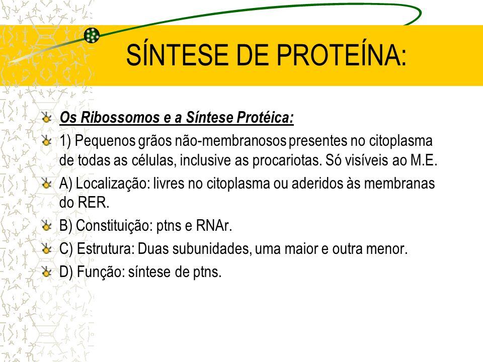 SÍNTESE DE PROTEÍNA: Os Ribossomos e a Síntese Protéica: 1) Pequenos grãos não-membranosos presentes no citoplasma de todas as células, inclusive as procariotas.