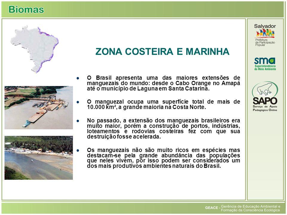 O Brasil apresenta uma das maiores extensões de manguezais do mundo: desde o Cabo Orange no Amapá até o município de Laguna em Santa Catarina.