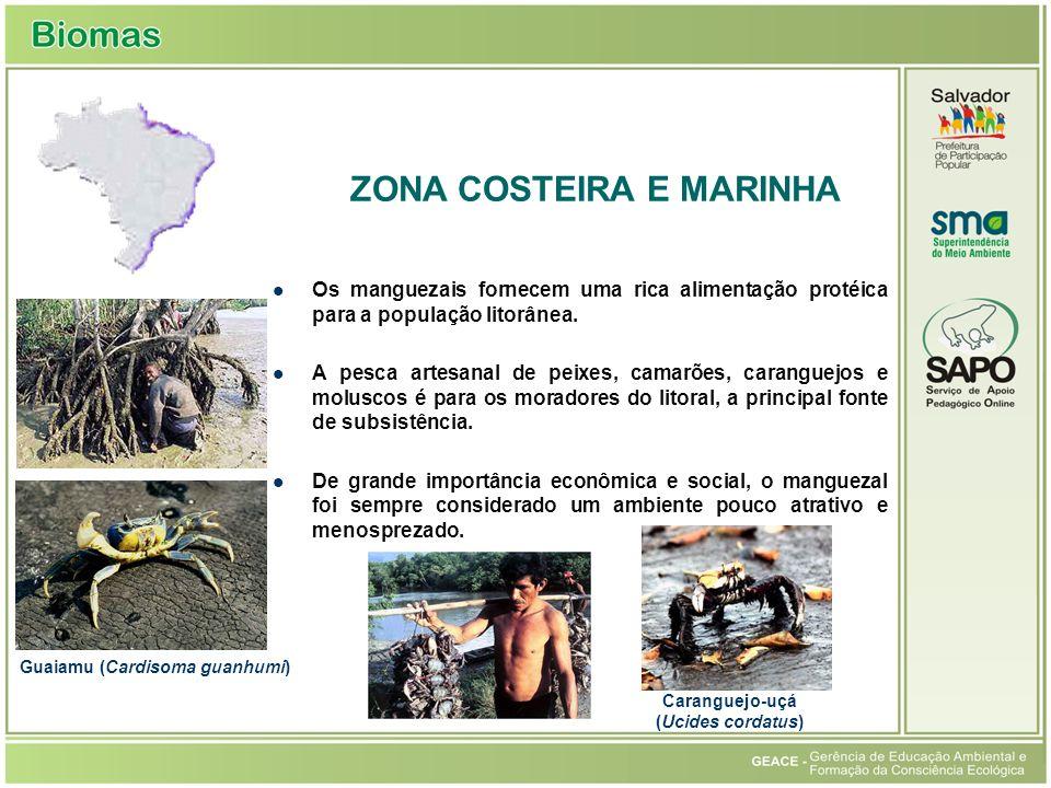 Os manguezais fornecem uma rica alimentação protéica para a população litorânea.