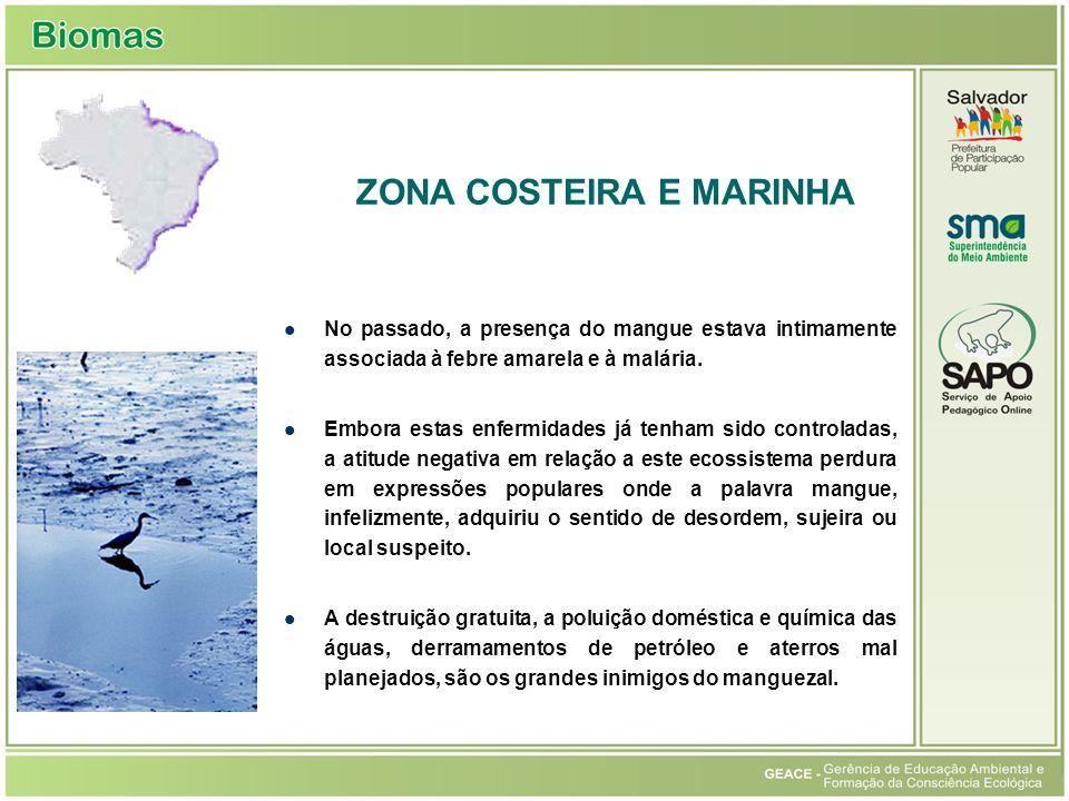 No passado, a presença do mangue estava intimamente associada à febre amarela e à malária.