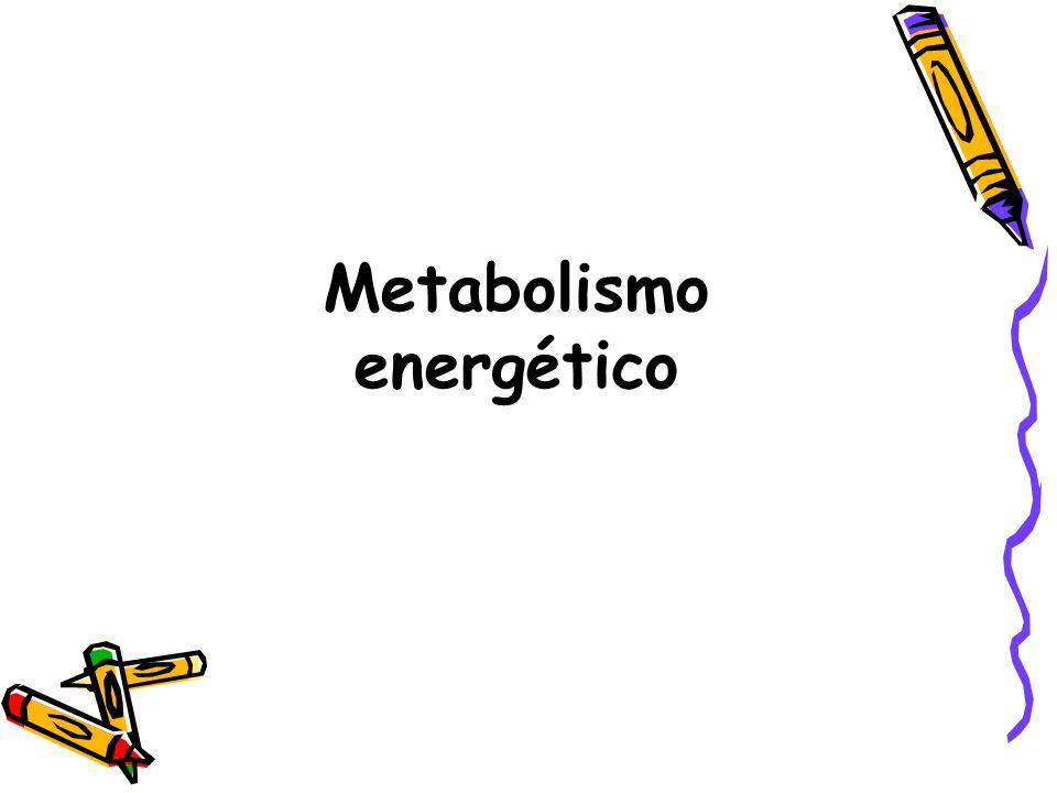 Um dos principais problemas dos seres vivos é a obtenção de energia para as suas atividades.