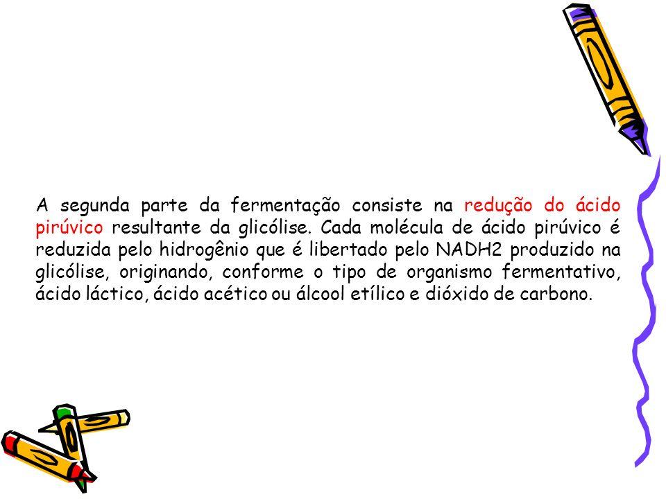 A segunda parte da fermentação consiste na redução do ácido pirúvico resultante da glicólise. Cada molécula de ácido pirúvico é reduzida pelo hidrogên