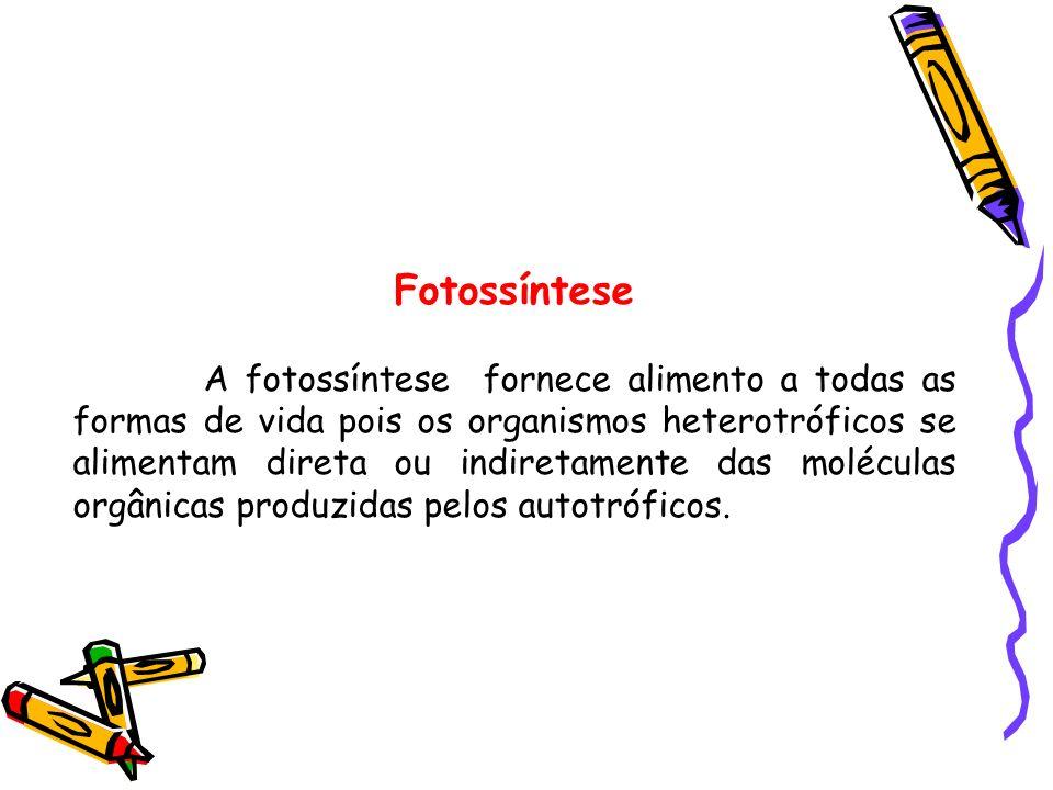 Fotossíntese A fotossíntese fornece alimento a todas as formas de vida pois os organismos heterotróficos se alimentam direta ou indiretamente das molé