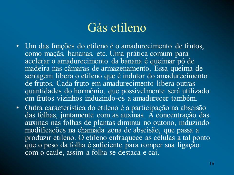 Gás etileno Um das funções do etileno é o amadurecimento de frutos, como maçãs, bananas, etc. Uma prática comum para acelerar o amadurecimento da bana